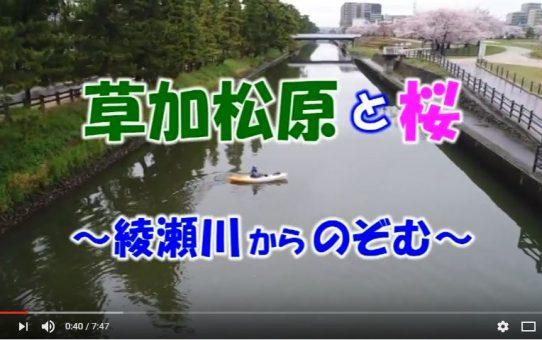 【動画】草加松原と桜~綾瀬川からのぞむ~