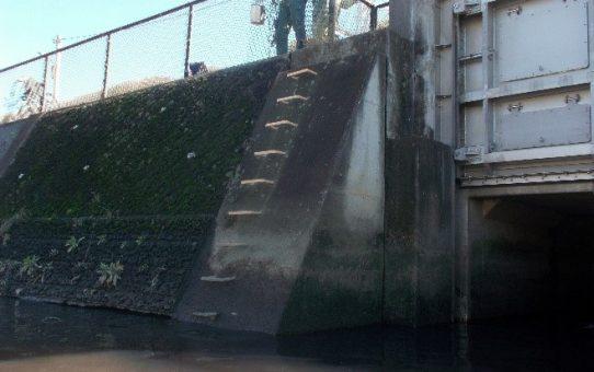 怒れ!綾瀬川、事業所モラル 汚染水不法投棄 !