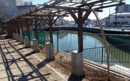 伝右川/甚左衛門船着場 3本のフジを植栽