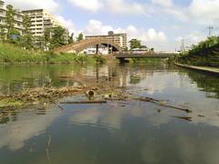 草加市と国土交通省へ働きかけます ! きれいな河川環境の整備